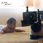 Render-Protistas-Nefertiti-03-e1418842588320